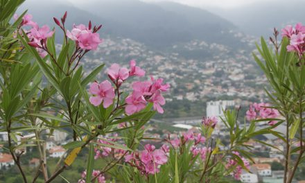 Mad about Madeira