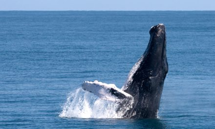 Have a whale of a time in the Dominican Republic