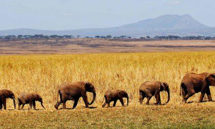 Nomad Tanzania to launch Kuro Camp, Tarangire