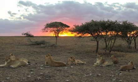 Asilia Africa opens Namiri Plains, Serengeti