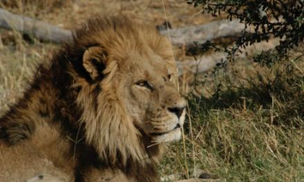 Acacia Africa offering discount on Kenyan adventure