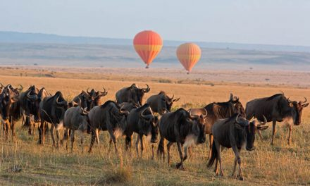Serengeti Camp welcomed to Newmark Collection